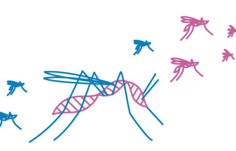 Gene Drive Projekt Bild