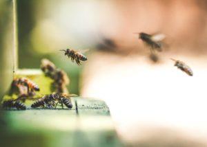 Emder Vortrag 2019 Bienen